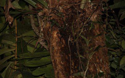 Finde das Skorpion