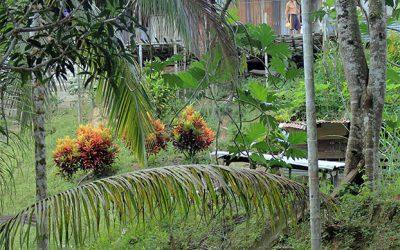 Leben im Dschungel
